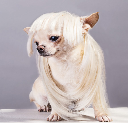 dog with long hair being groomed
