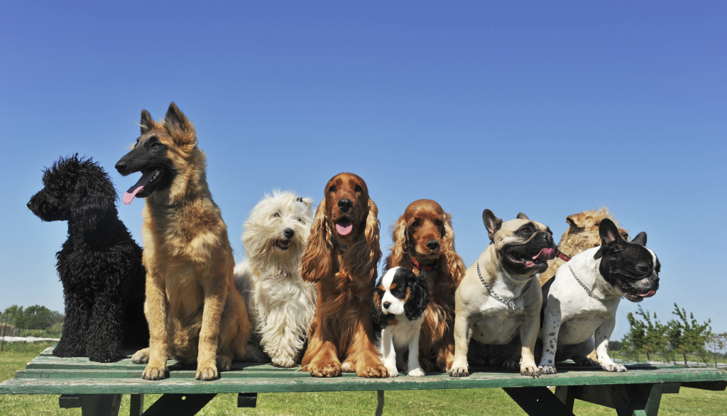 Dog daycare in Wahroonga - fox valley animal hospital
